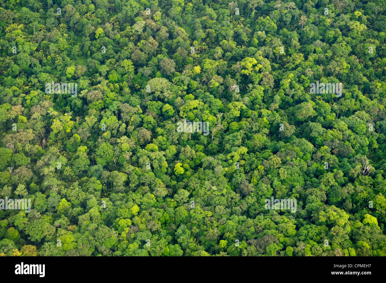 La canopée de la forêt tropicale de l'air, Parc National de Tortuguero, Costa Rica Photo Stock