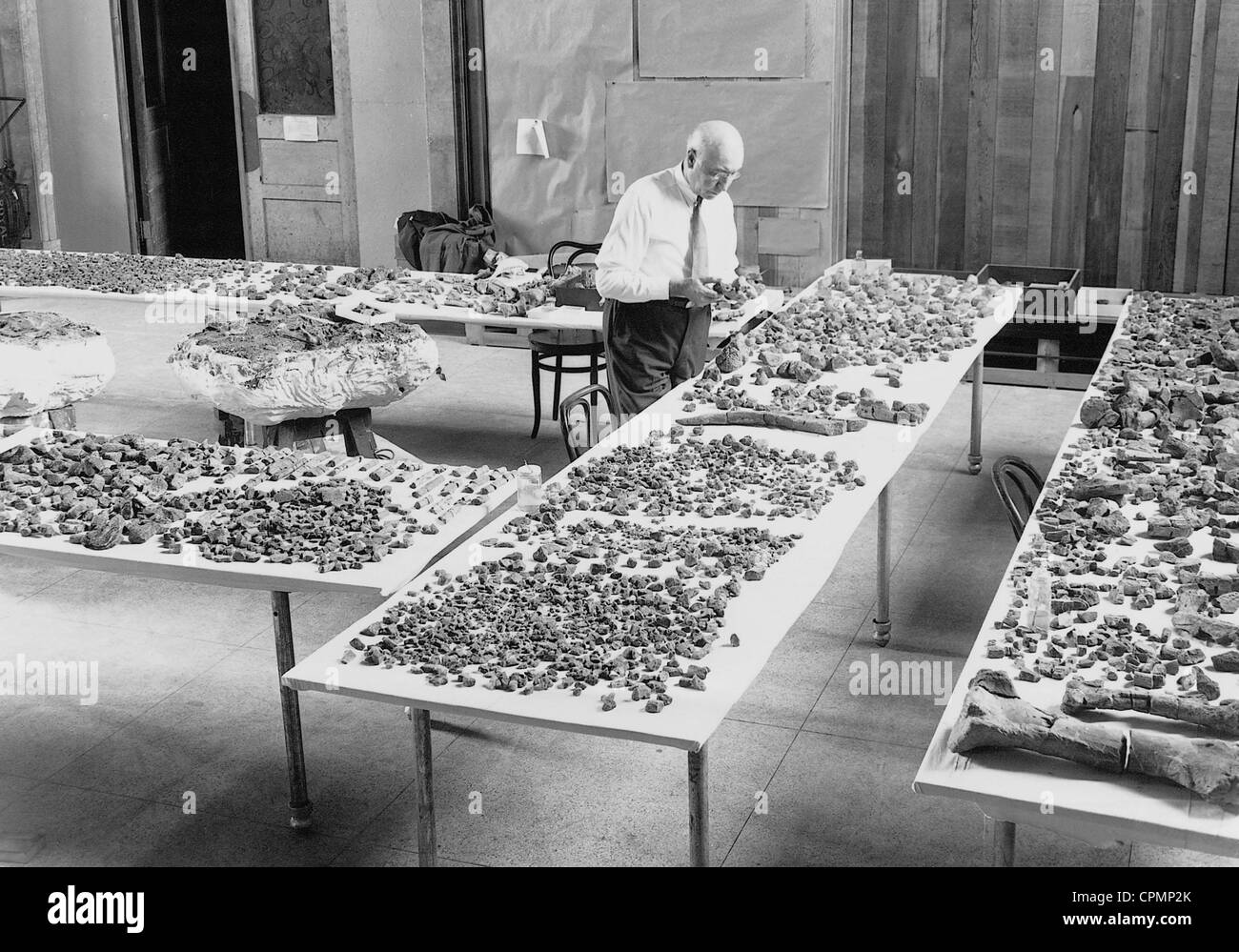 Barnum Brown avec un fossiles, 1933 Photo Stock