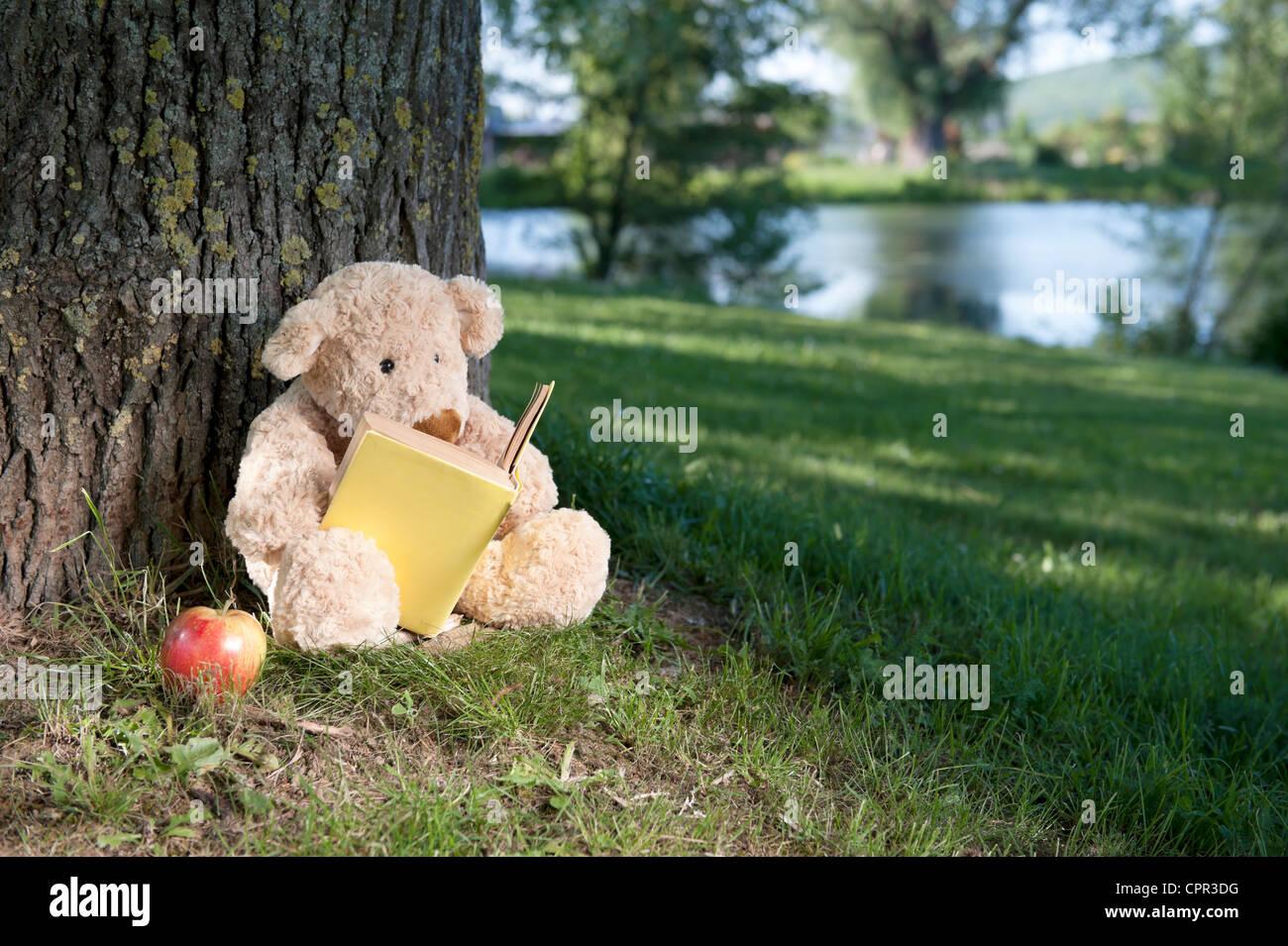Ours de lire un livre sous un arbre Photo Stock