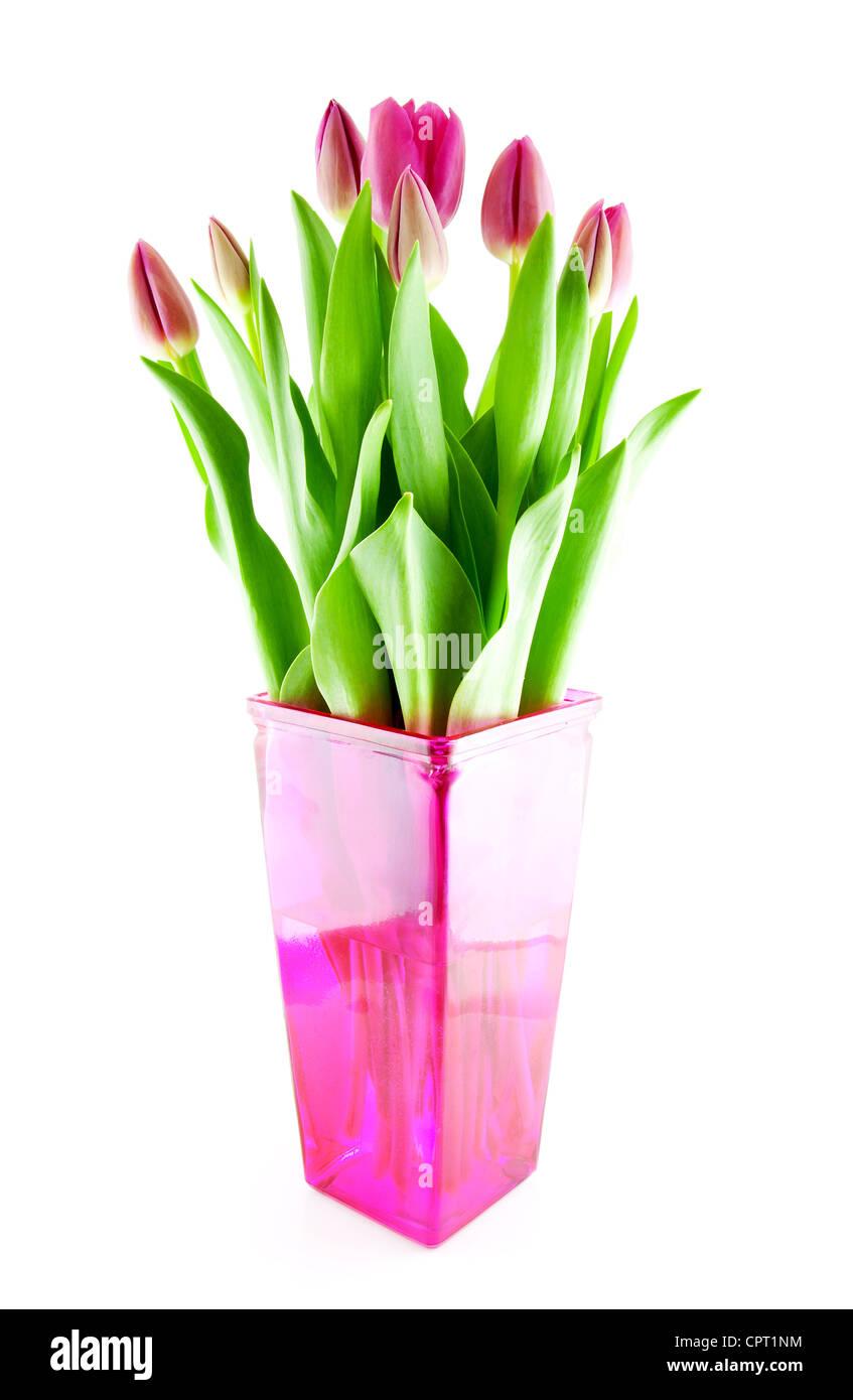 Bouquet de tulipes hollandaises dans un vase rose sur fond blanc Banque D'Images
