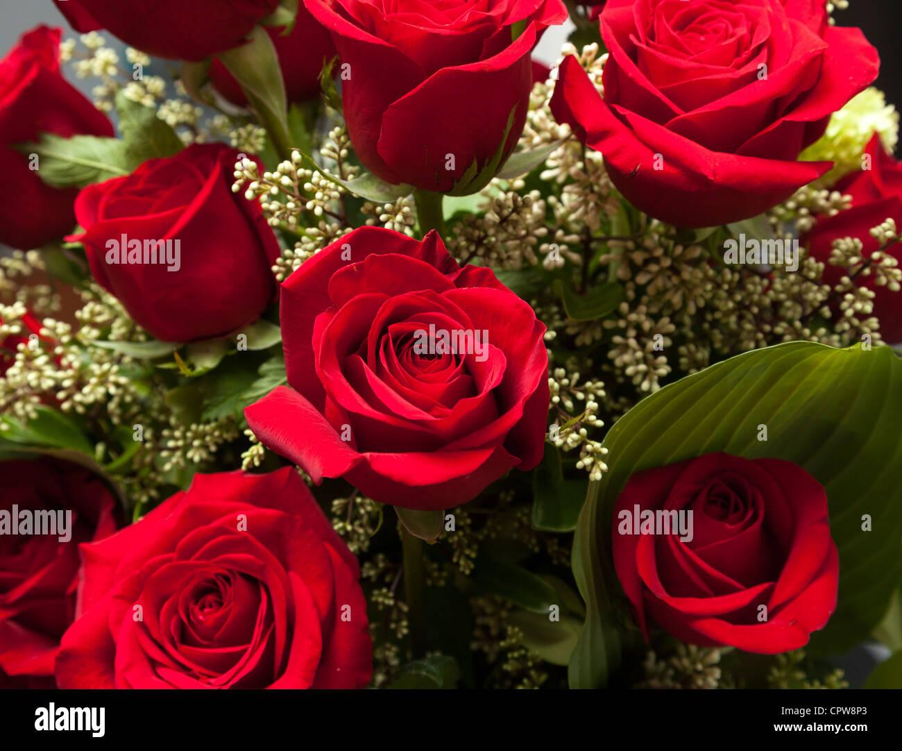 Bouquet de roses rouges dans un bouquet Saint-Valentin close up sur les fleurs Photo Stock