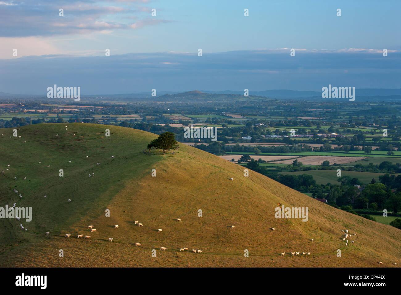 Parrock Hill avec Tor de Glastonbury dans la distance, à partir de la colline de Corton, Somerset, England, Photo Stock