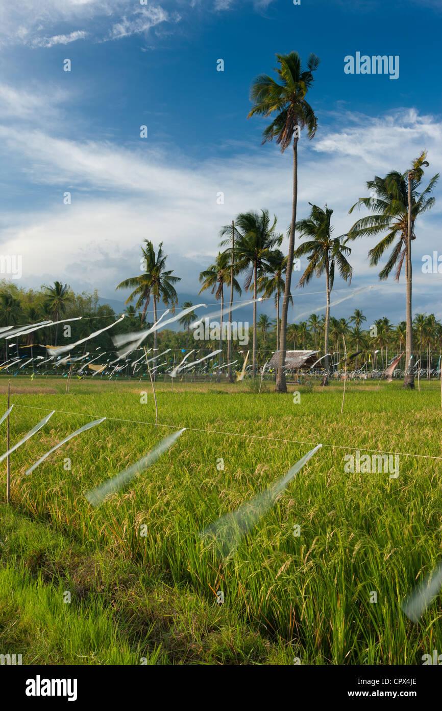 Les rizières, palmiers et montagnes au-delà, nr Malatapay, Negros, Philippines Photo Stock