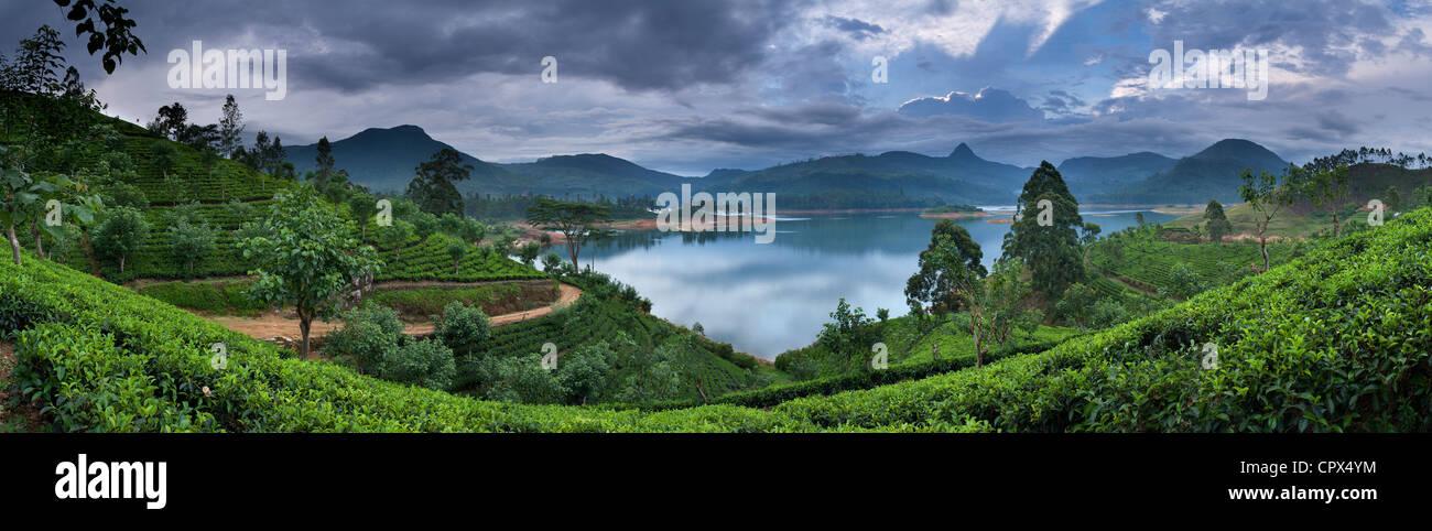 Sri Pada (Adam's Peak) d'une plantation de thé sur le lac Maskeliya, hauts plateaux du centre, Sri Photo Stock