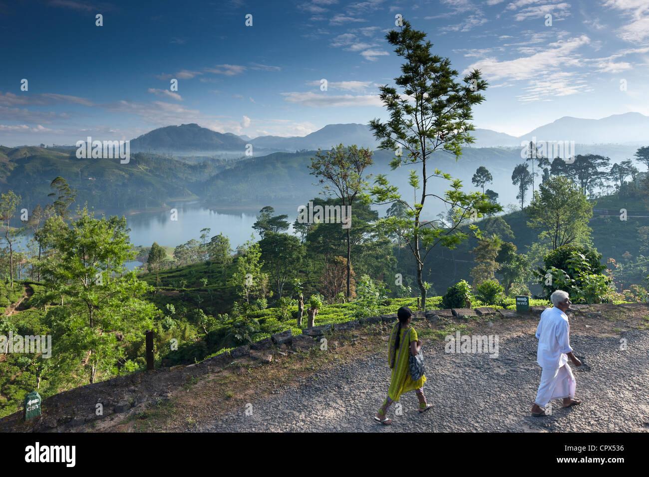 Une plantation de thé près de Hatton, hauts plateaux du centre, Sri Lanka Photo Stock