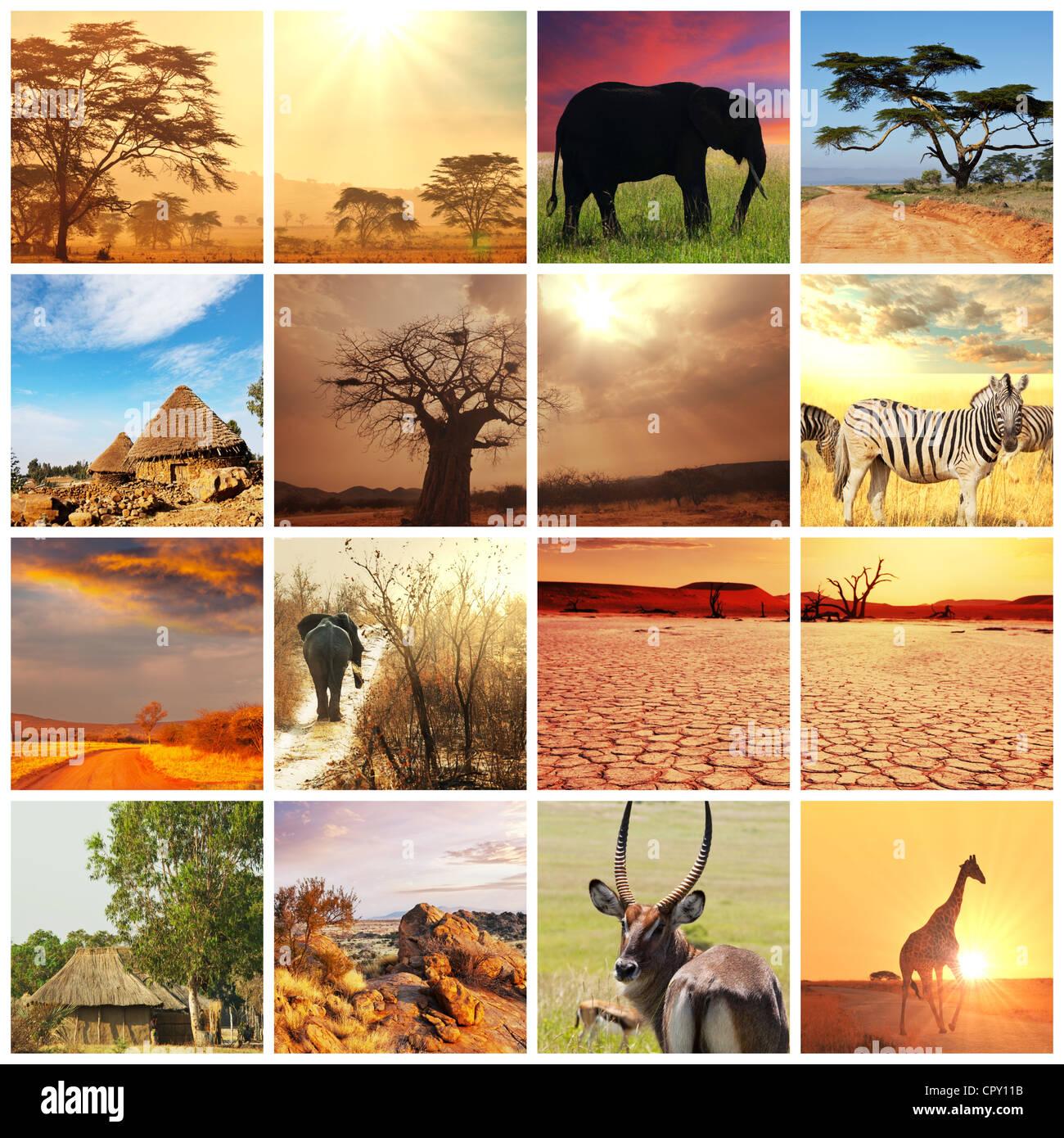 African Safari dans le parc d'Etosha, Namibie Photo Stock