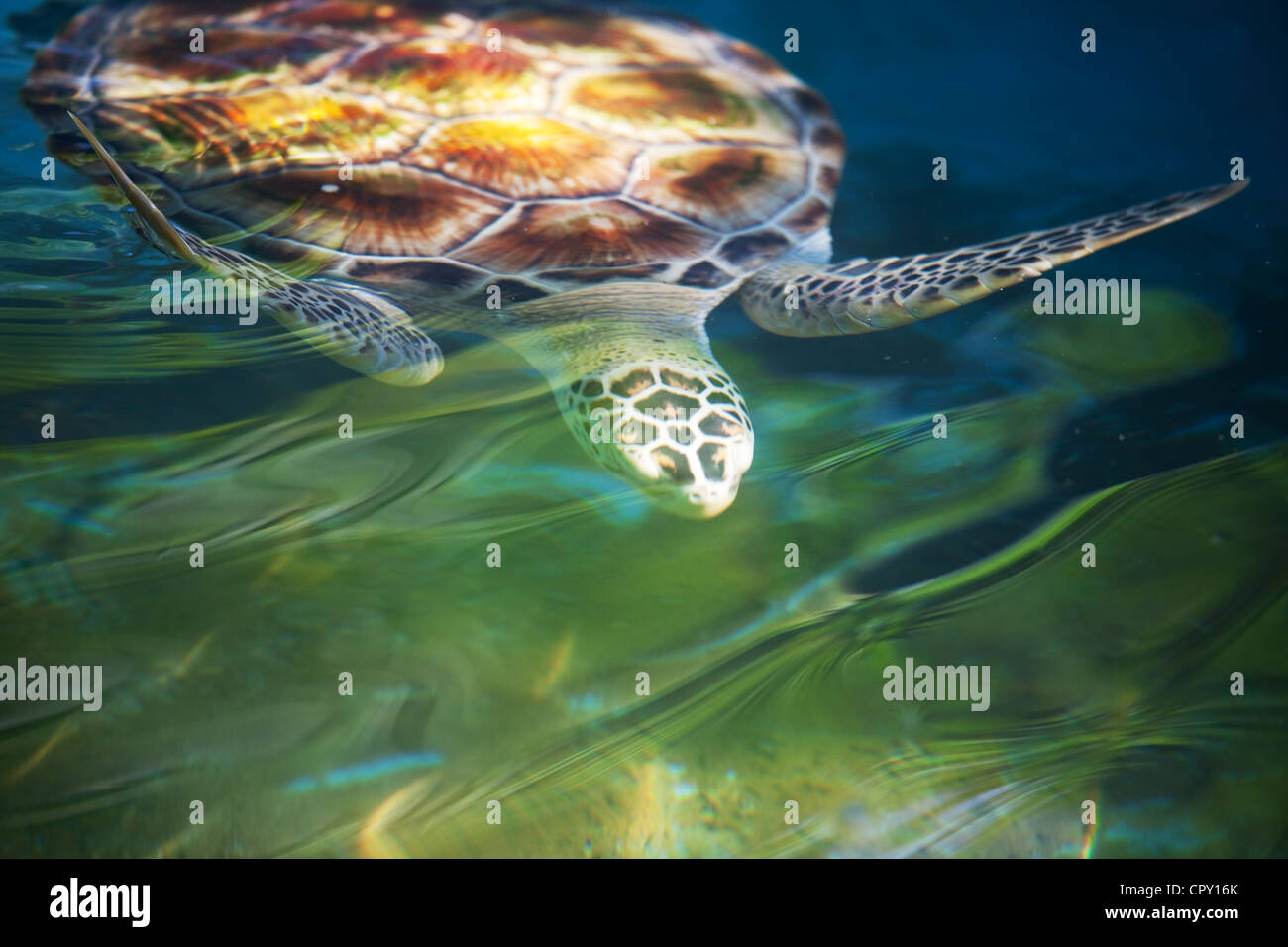 Turtle Photo Stock