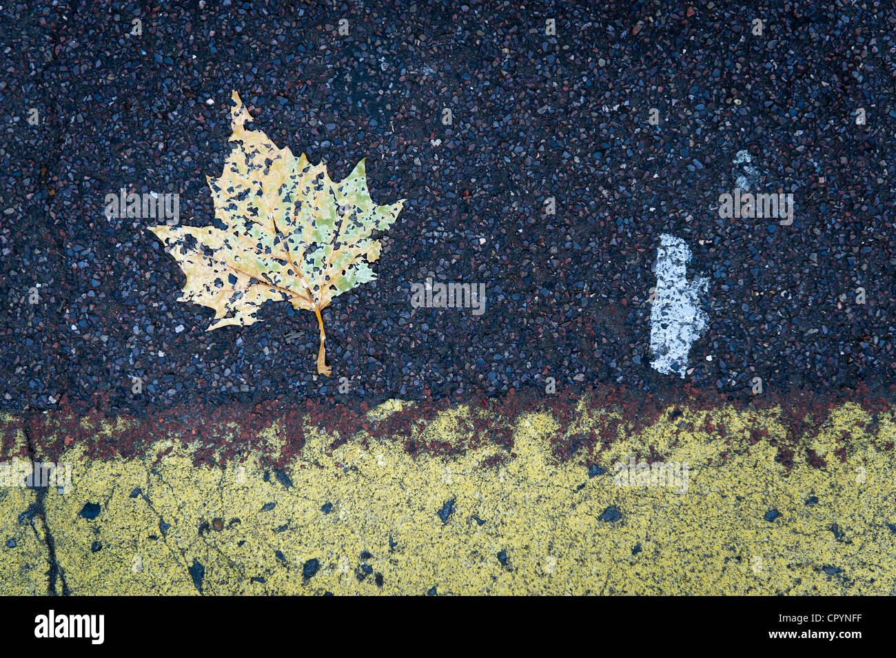La feuille et le marquage routier, Brixton, Londres, Angleterre, Royaume-Uni, Europe Photo Stock