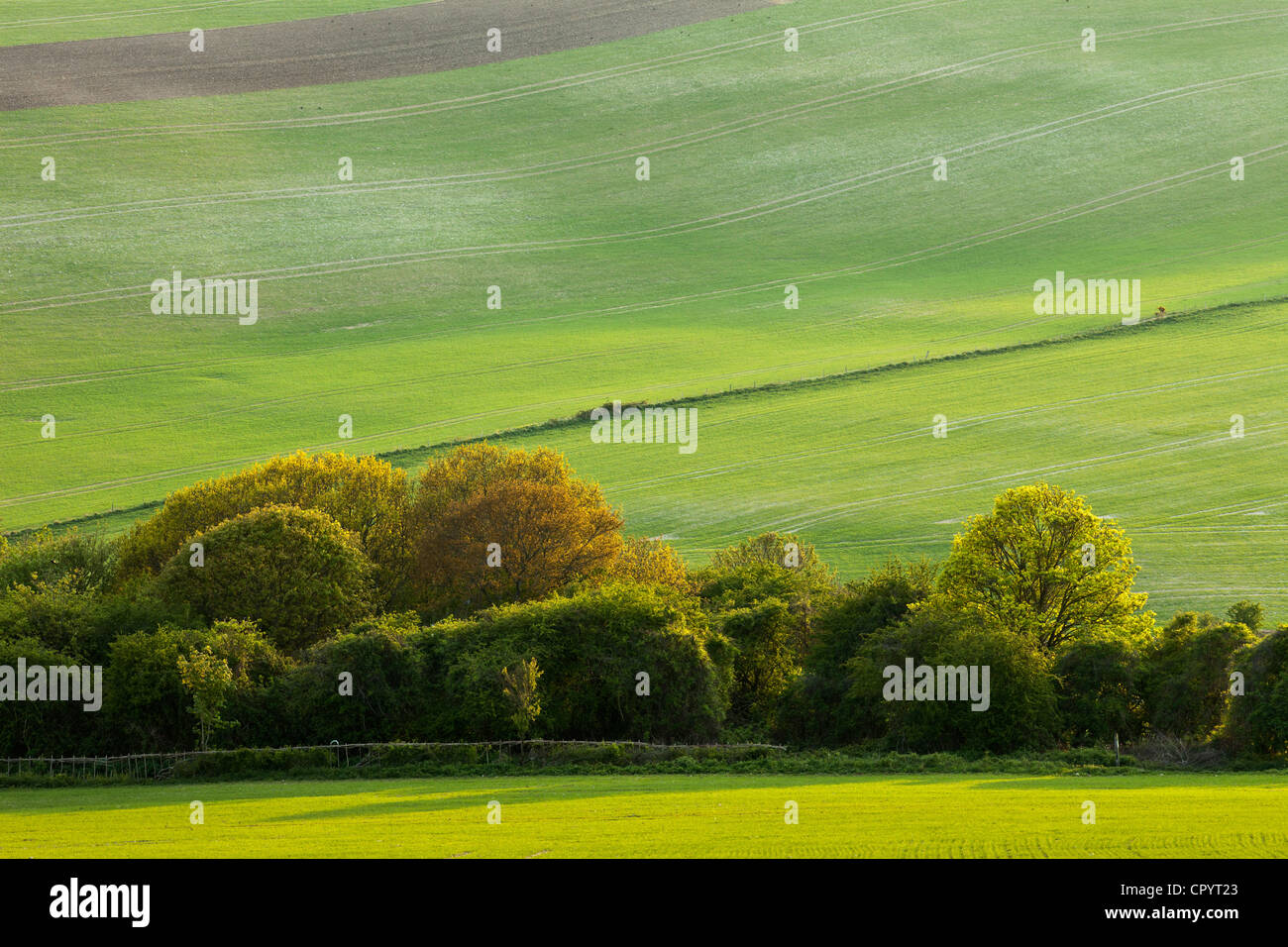 Le Parc National de South Downs, East Sussex, Angleterre. Photo Stock