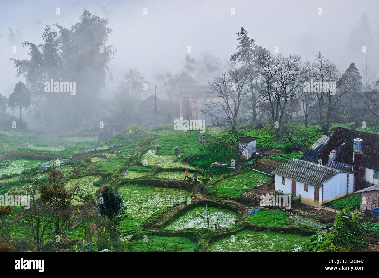 Maisons, terrasses agricoles, champs de légumes dans le brouillard près de Sapa, Sa Pa, province de Lao Photo Stock