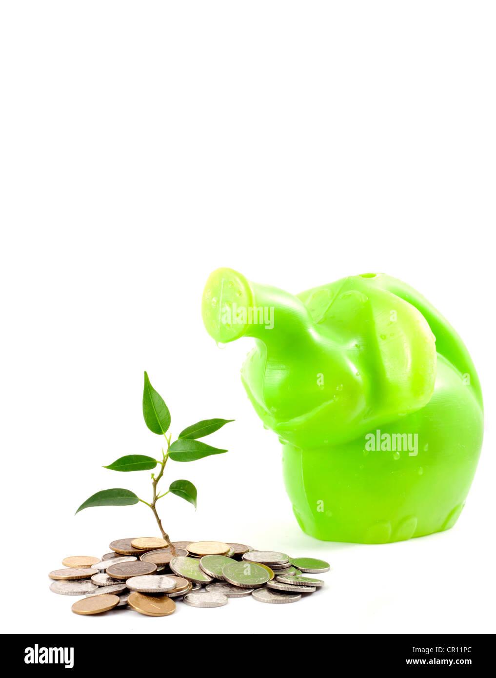 Plante verte sur le fond blanc de la métaphore d'économiser de l'argent à la banque et à Photo Stock