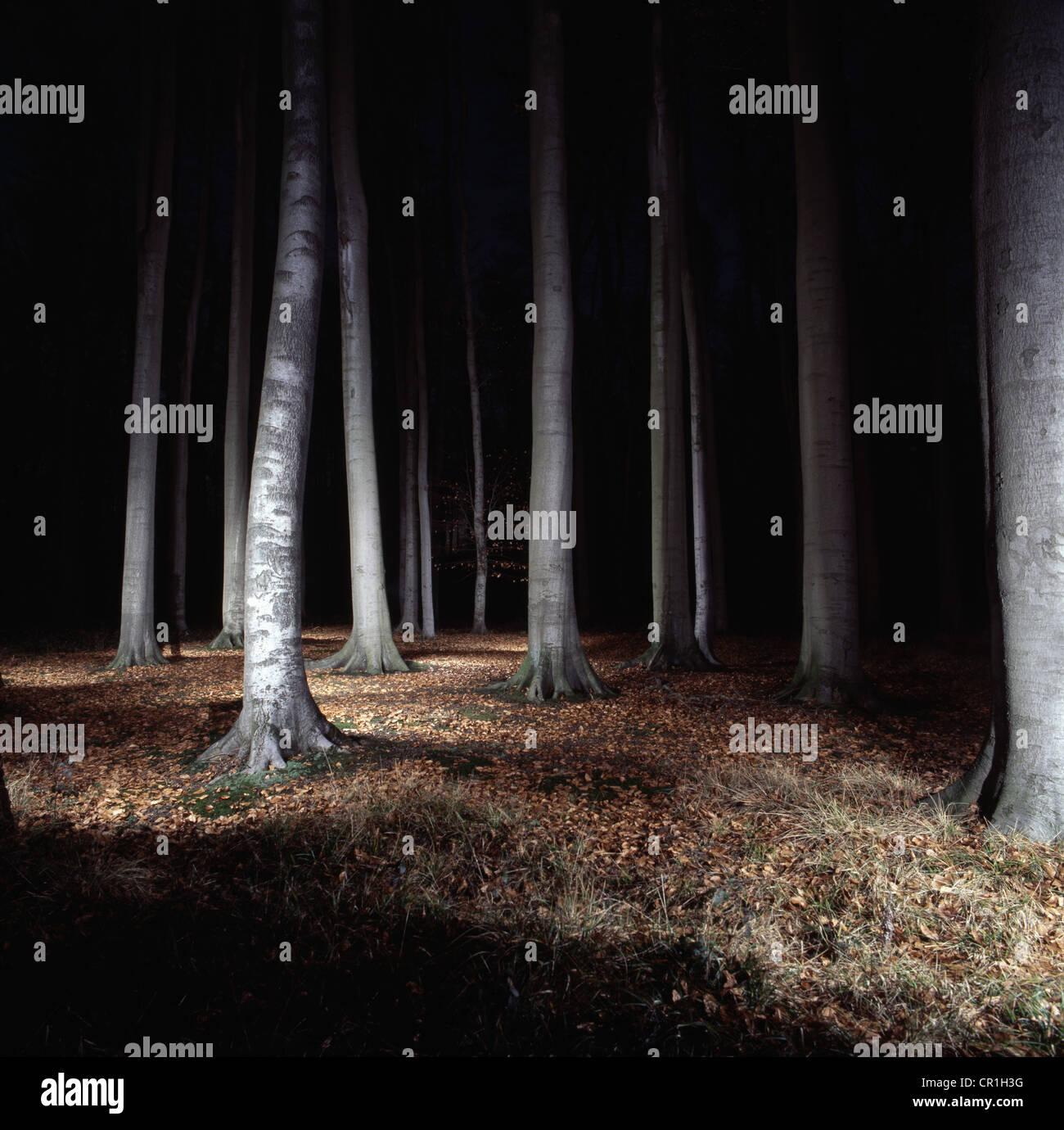 Arbres en forêt éclairée la nuit Photo Stock