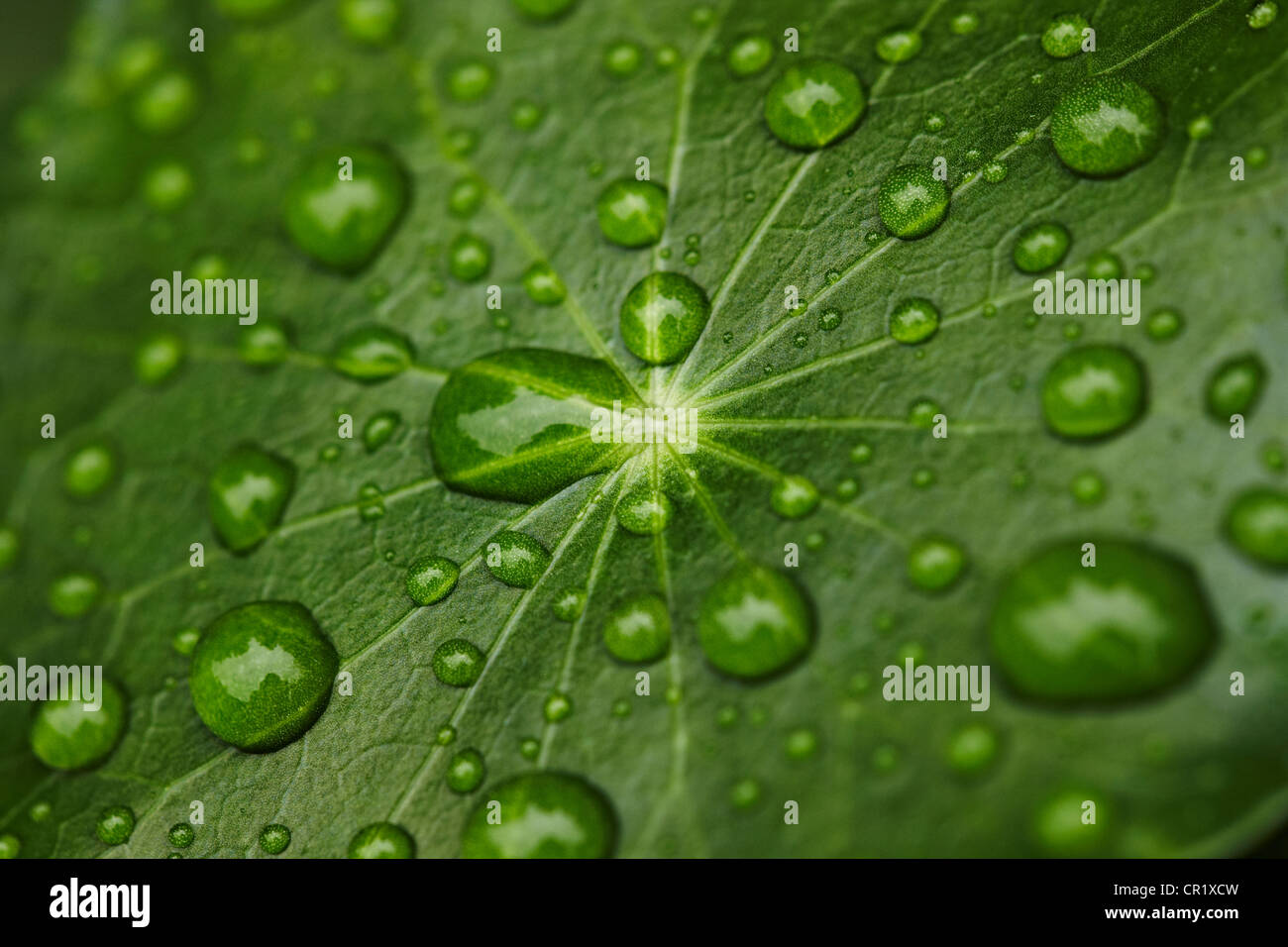 Close up of water droplets on leaf Photo Stock