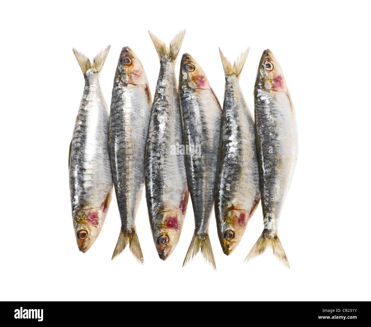 sardines entières Photo Stock