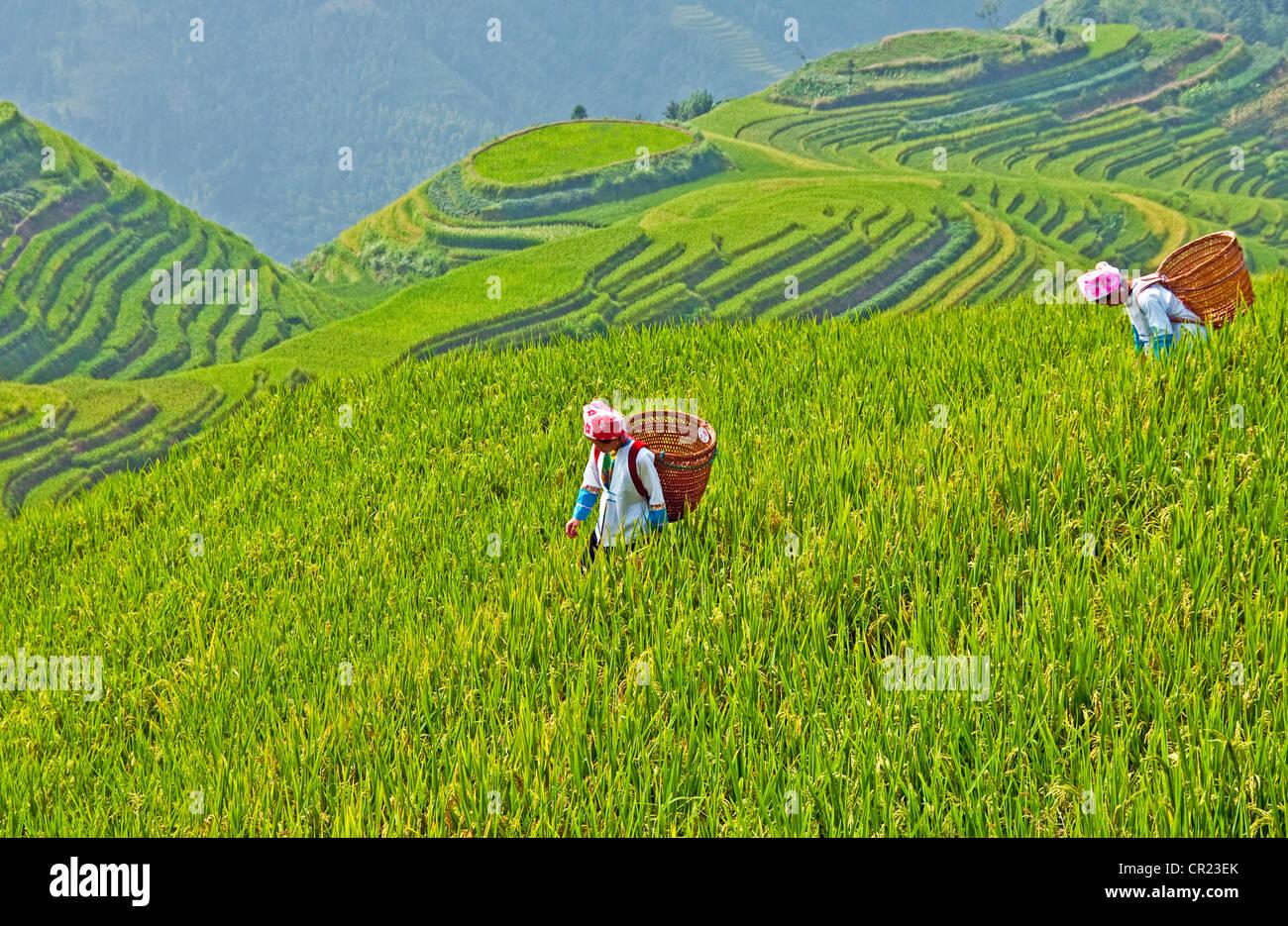 Longji terrasses (Dragon's Back) au village de Ping'an, avec la nationalité Zhuang femmes dans les Photo Stock
