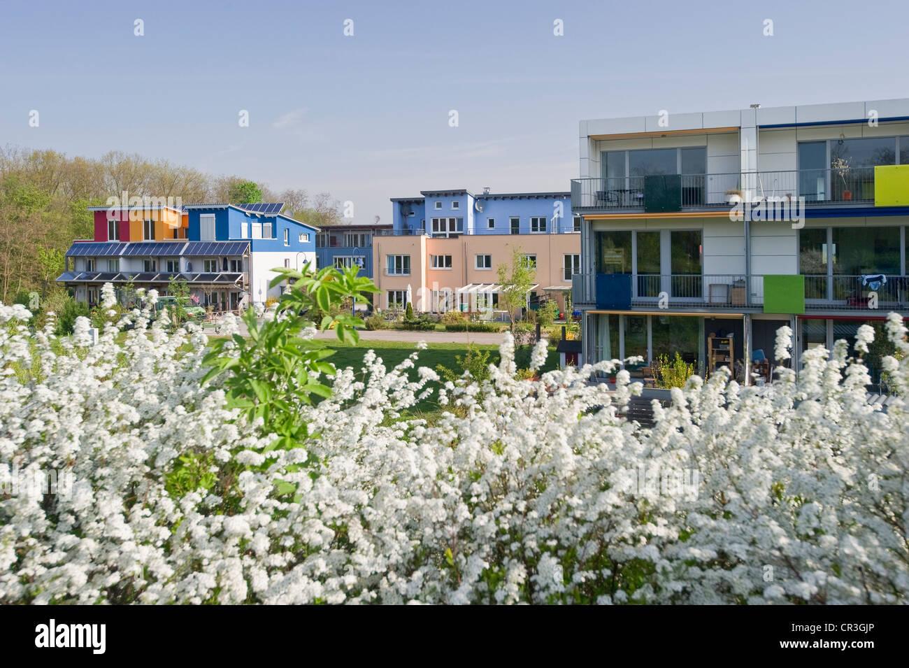 Maisons passives, quartier Rieselfeld, Freiburg im Breisgau, Bade-Wurtemberg, Allemagne, Europe Photo Stock