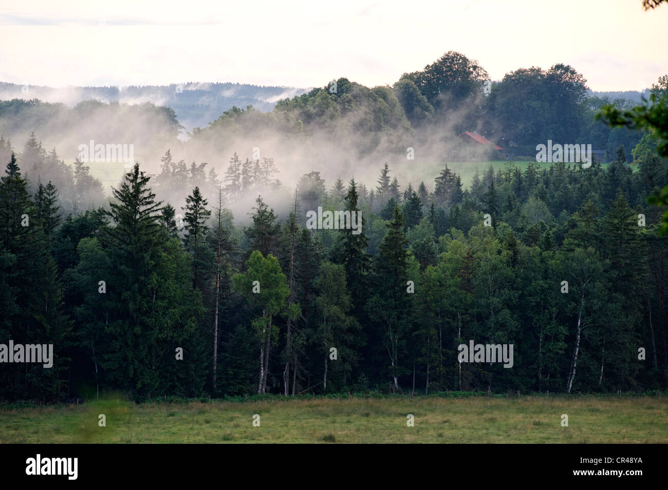 Brouillard après un orage en été, le soir, l'humeur Nantesbuch près de Bad Heilbrunn, Upper Photo Stock