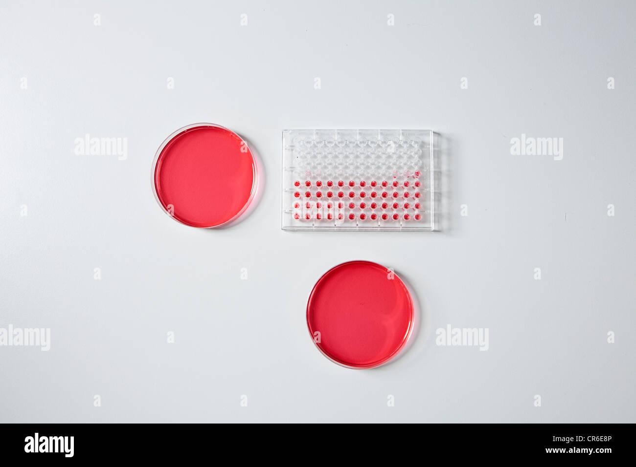Germany, Bavaria, Munich, bac d'essai et des boîtes de Pétri en laboratoire pour la recherche médicale Photo Stock