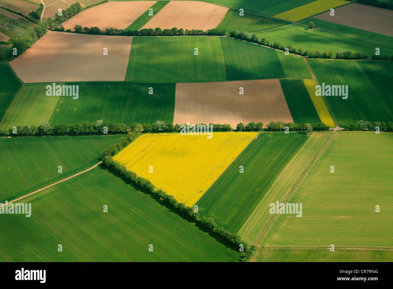 Vue aérienne, des champs de céréales et de canola champs séparés par des haies, Erbes-Buedesheim, Photo Stock