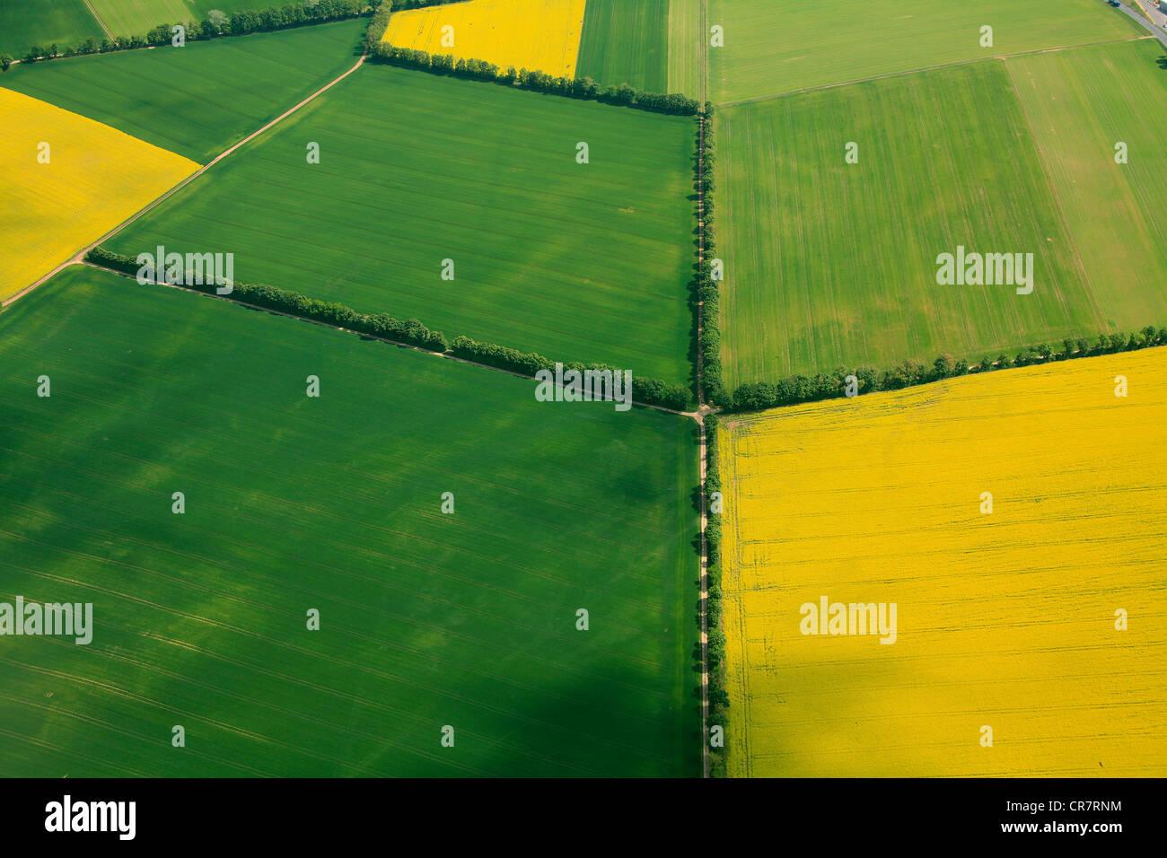 Vue aérienne, des champs de céréales et de canola champs séparés par des haies, Erbes-Buedesheim, Rhénanie-Palatinat, Banque D'Images