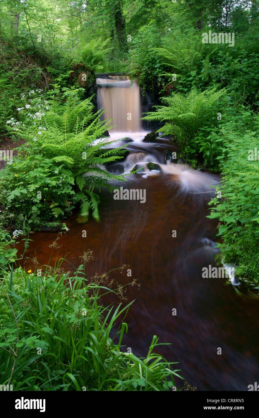 UK,South Yorkshire,Sheffield Rivelin Valley,Supérieure,roue de taillis Banque D'Images
