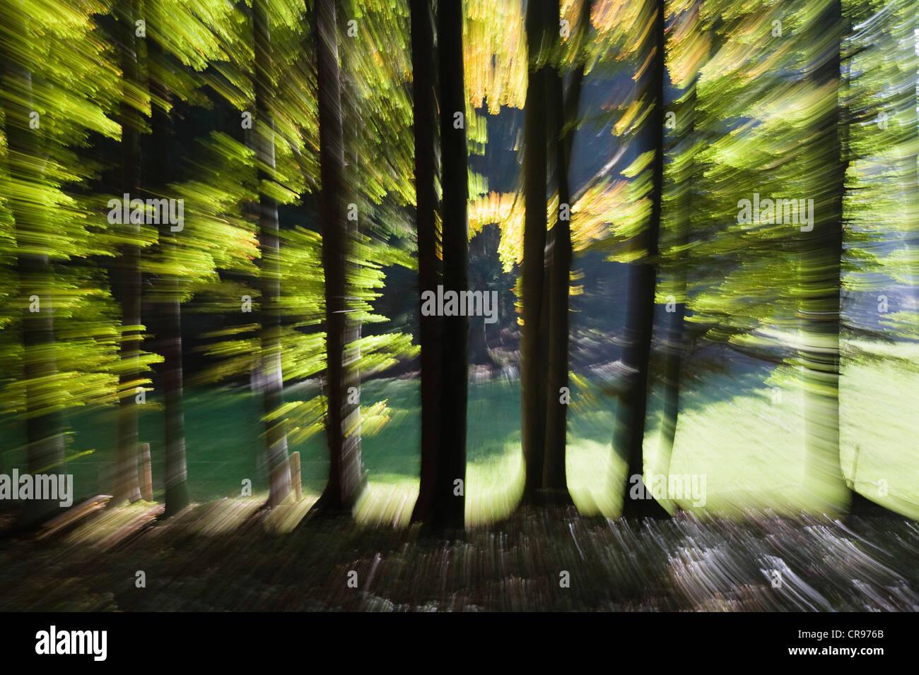 Impression de la forêt en automne, l'Allemagne, de l'Europe Photo Stock