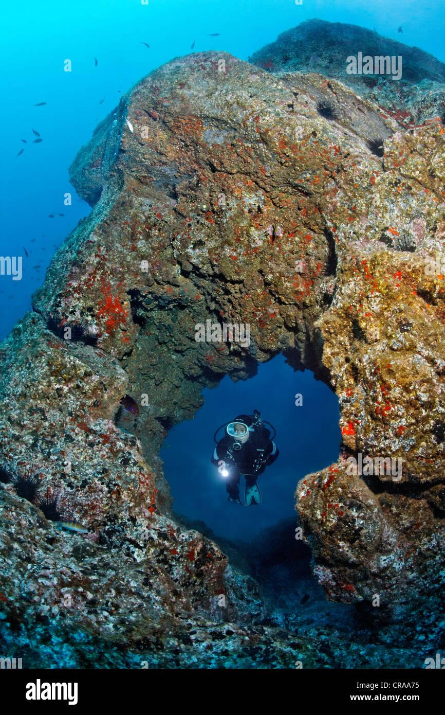 Plongée sous-marine l'observation d'un trou dans un rocher recouvert d'éponge crambe Crambe Photo Stock
