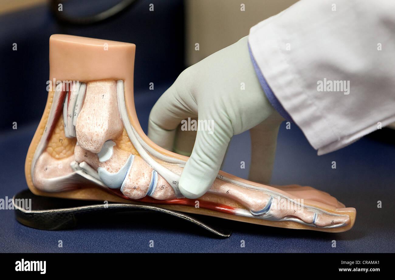 c1348b266ee Une main du médecin montre le fonctionnement interne d un pied ...