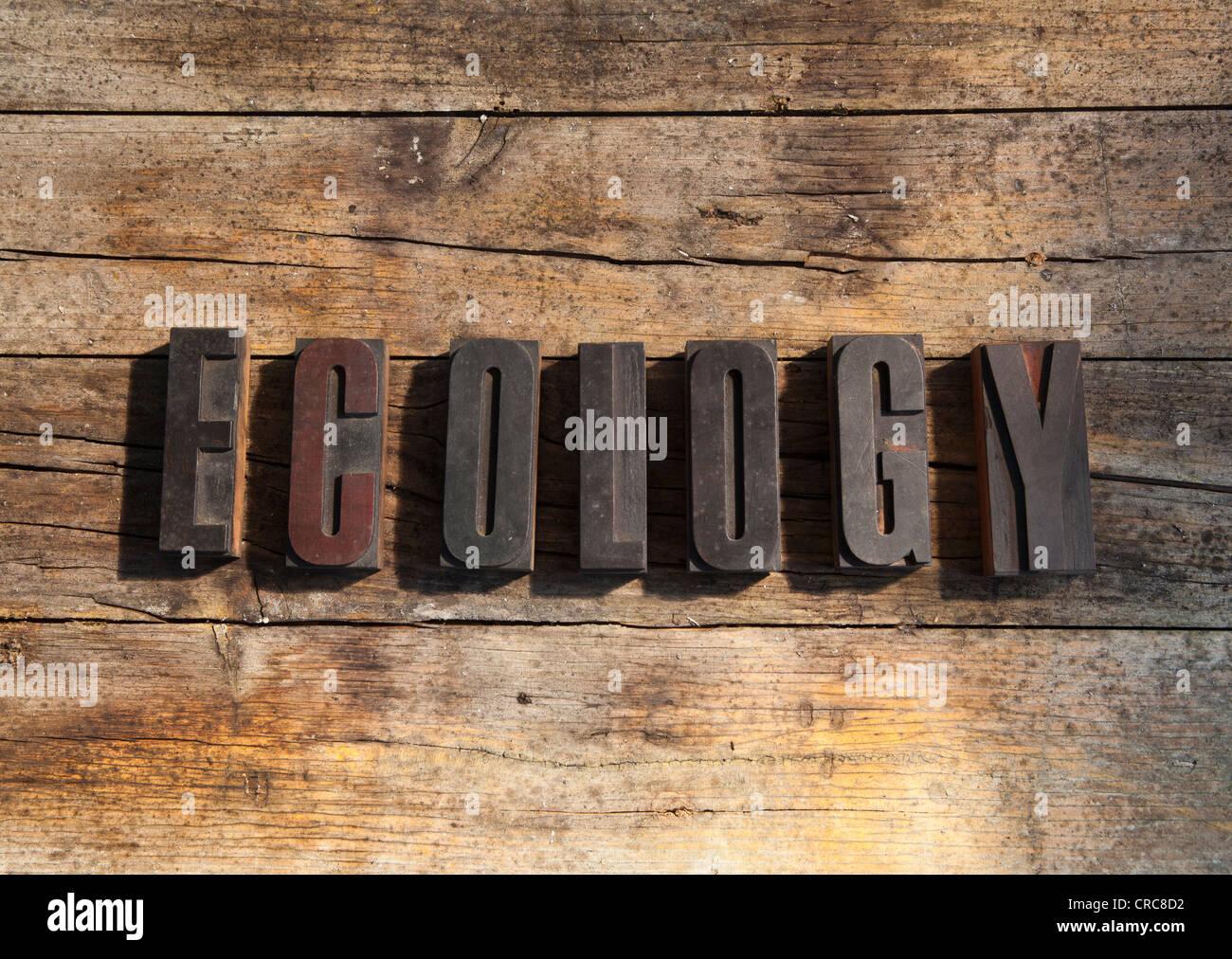 Blocs de bois écologie orthographe Photo Stock