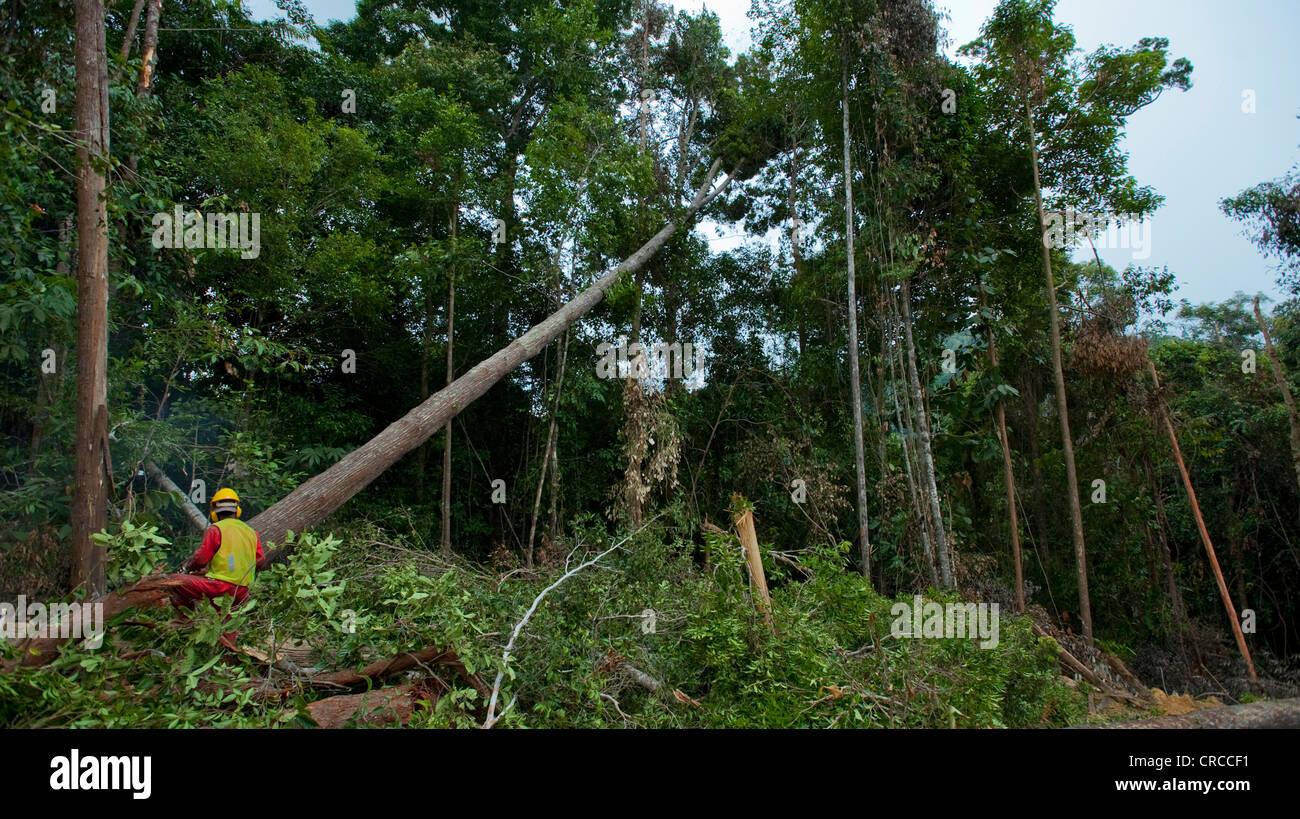 Le déboisement des forêts tropicales, l'Asie du Sud Est. Photo Stock