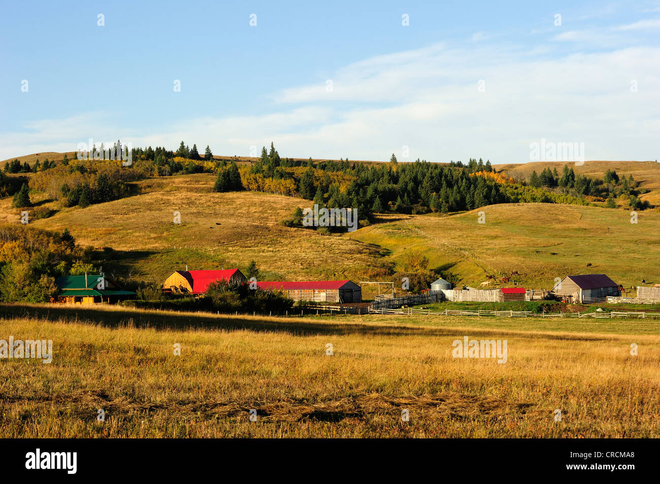 Ranch de cow-boy dans la prairie, Saskatchewan, Canada Photo Stock