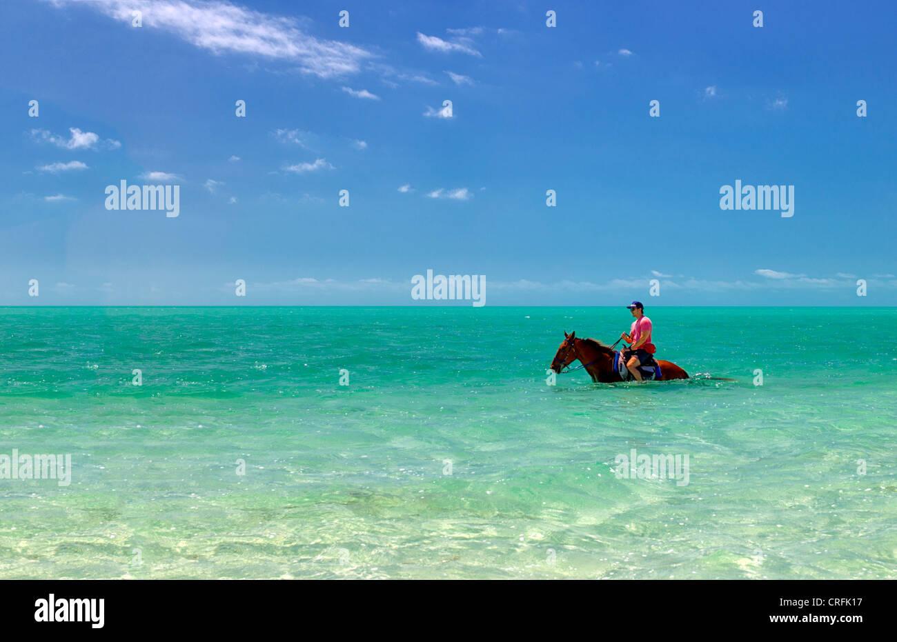 Horse rider dans l'eau. Providenciales. Îles Turques et Caïques. Photo Stock
