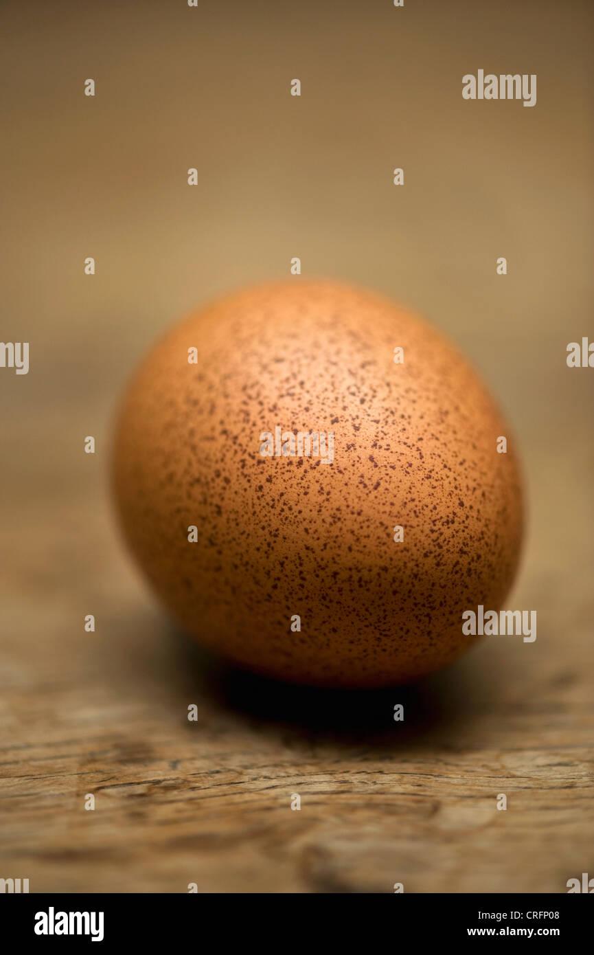 Close up of speckled egg Banque D'Images