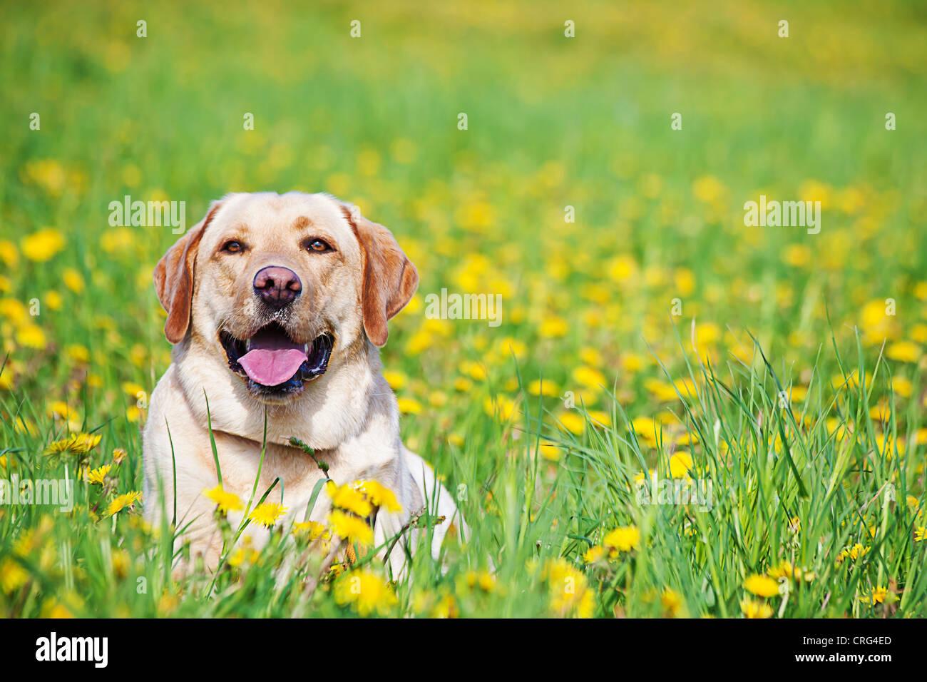 Portrait d'un chien dans le pré Photo Stock