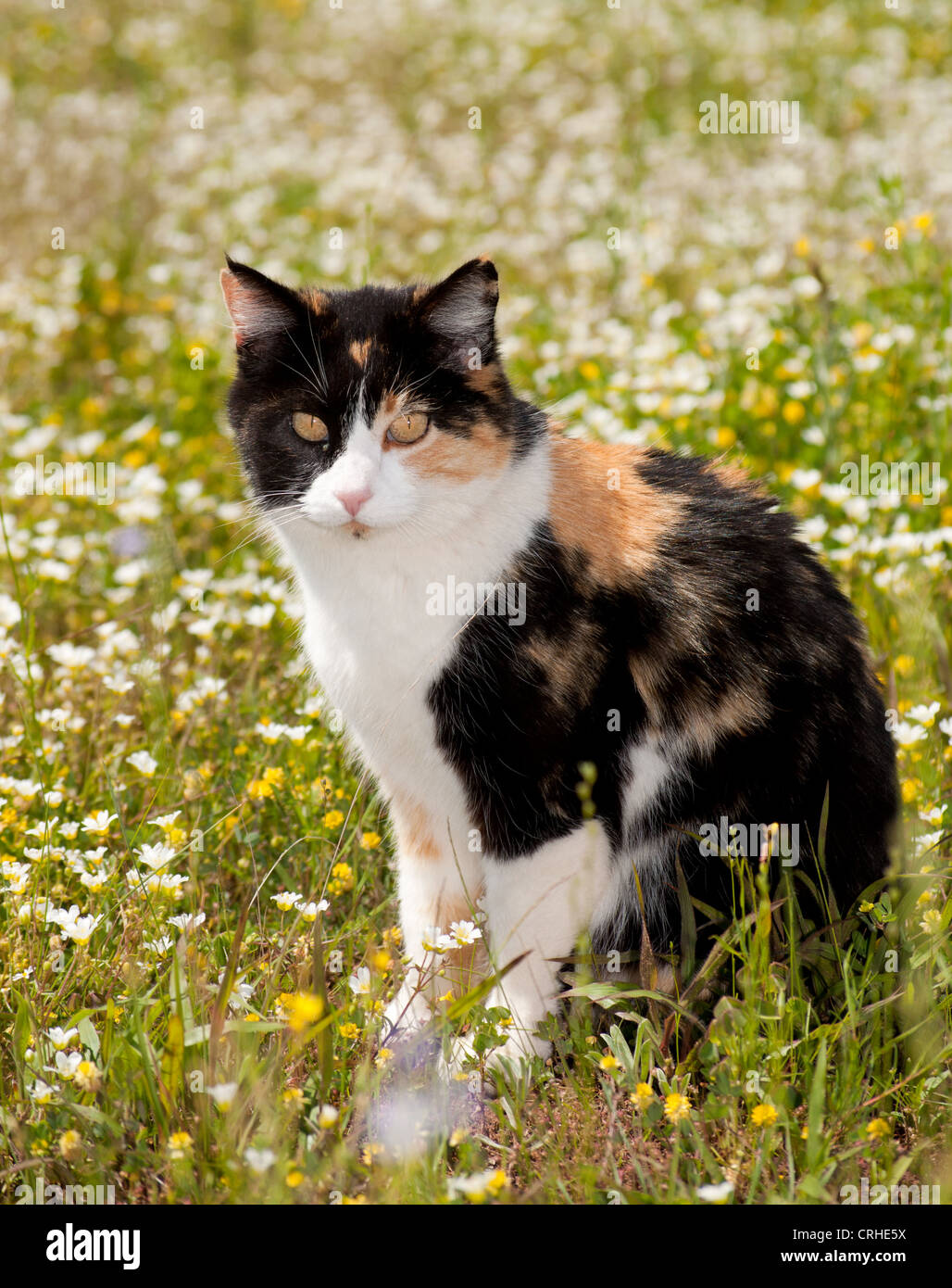 Beautyful chatte pic