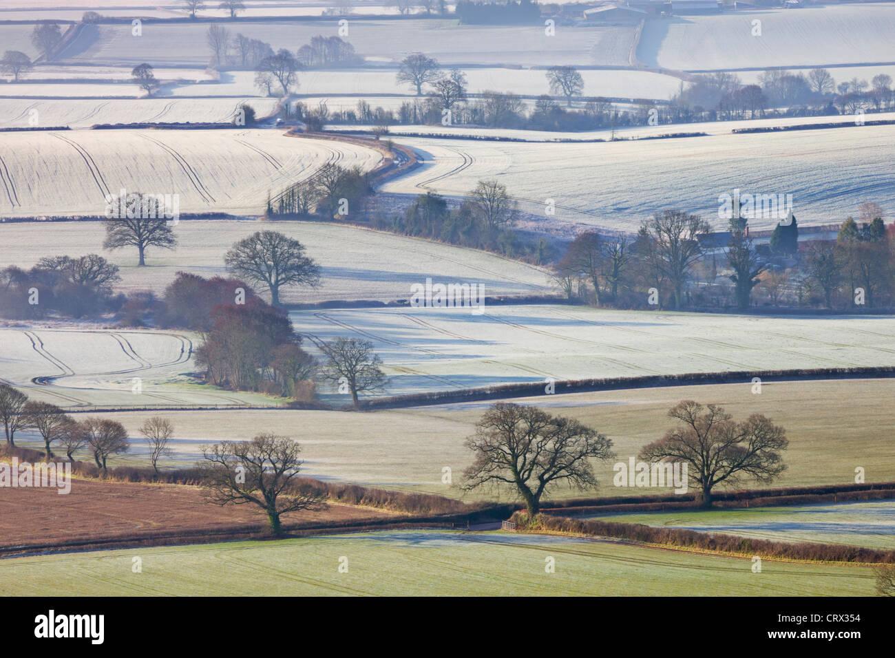 Les champs d'hiver givré près de Shobrooke, Devon, Angleterre. L'hiver (mars) 2010. Photo Stock