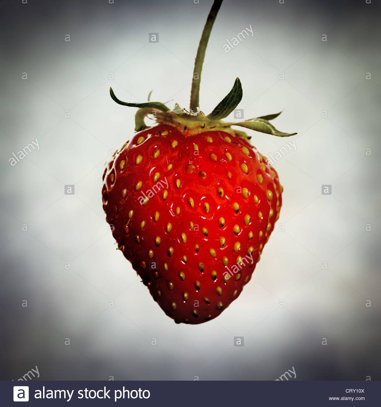 fraise mûre Photo Stock