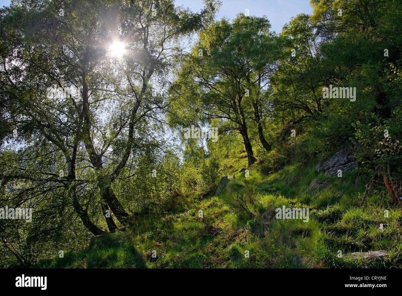 Pente boisée de Hill (près du village de Kluisbergen) - canton du Tessin - Suisse Photo Stock