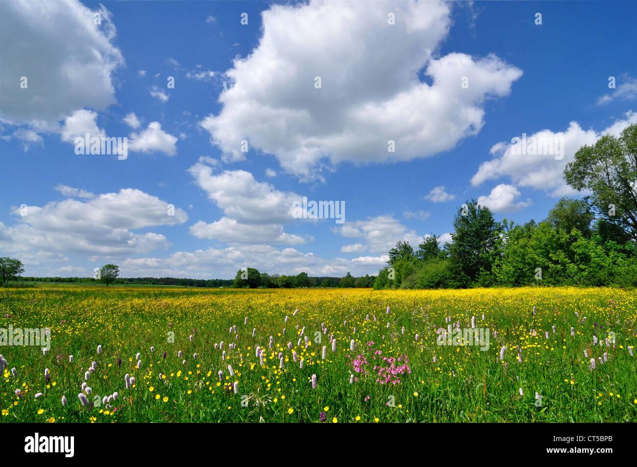 Paysage de printemps - prairie pleine de fleurs et de ciel bleu Photo Stock