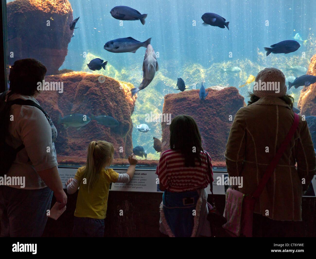 Visiteurs regardant diverses espèces de poissons du Golfe en grand aquarium de Monterey Monterey Californie Photo Stock