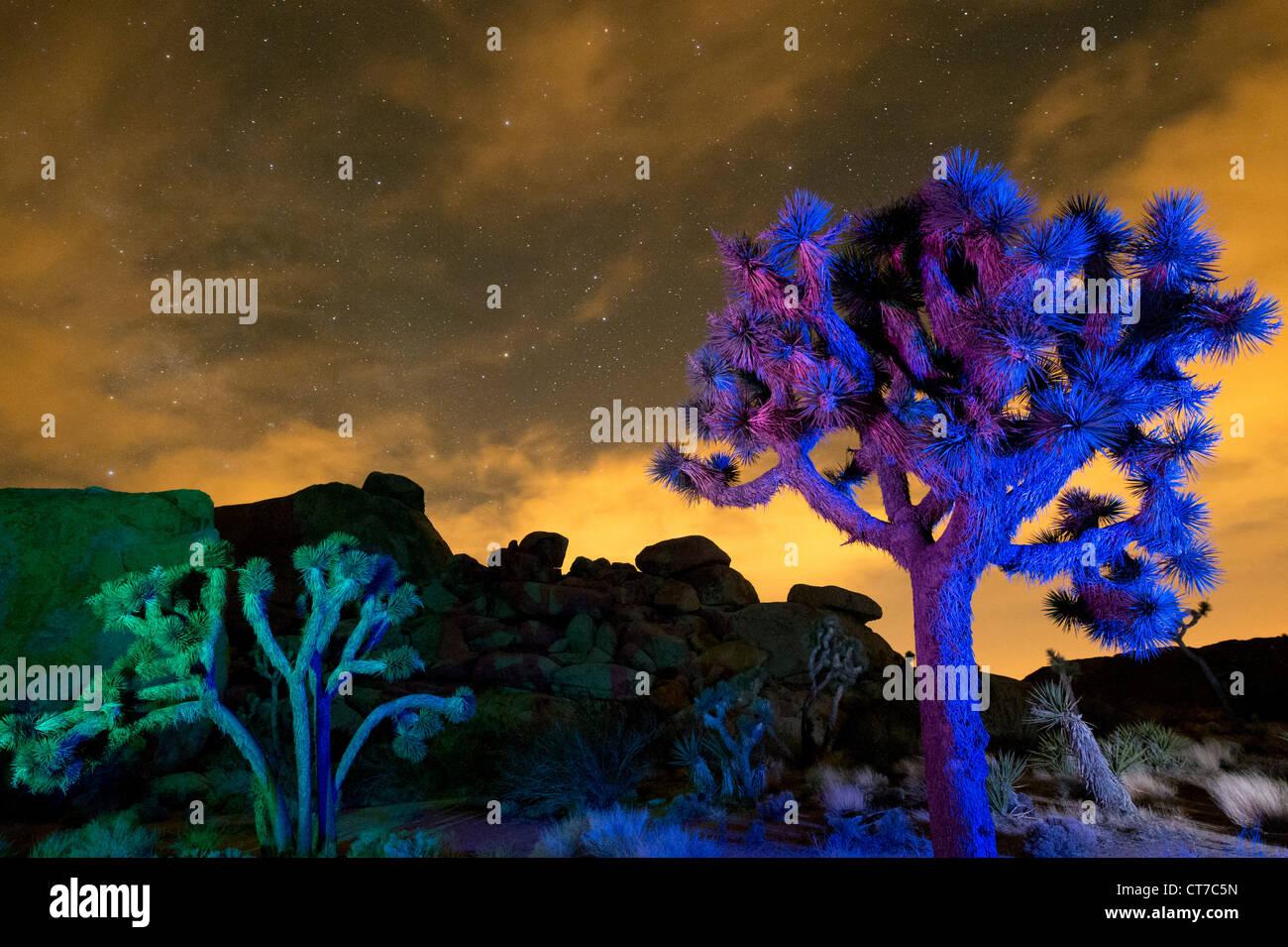 Lumières colorées sur les arbres la nuit, Joshua Joshua Tree National Park, California, USA Photo Stock