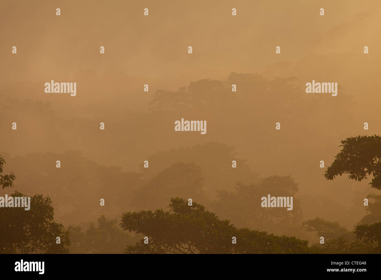 La brume au lever du soleil dans le parc national de Soberania, République du Panama. Banque D'Images