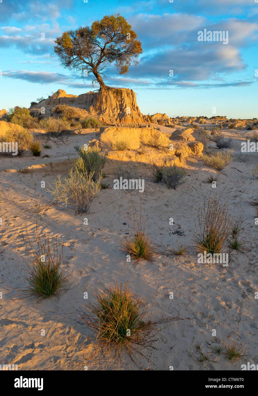 Les tendances dans les dunes de sable les murs de la Chine à Mungo National Park, New South Wales, Australie Banque D'Images