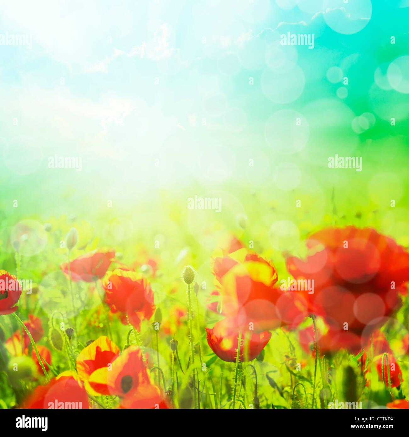 Champ de maïs d'été avec des fleurs de pavot bokeh Photo Stock