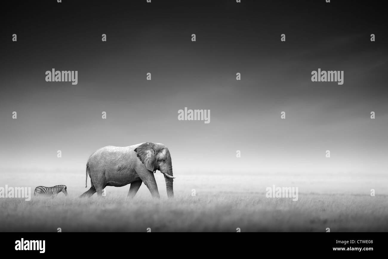 Éléphant avec zebra derrière sur les plaines d'Etosha - Namibie (traitement artistique) Photo Stock