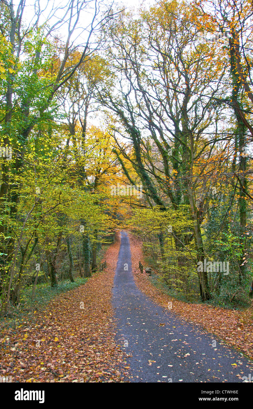 Chemin de campagne, route, piste au début de l'automne - la marche Photo Stock