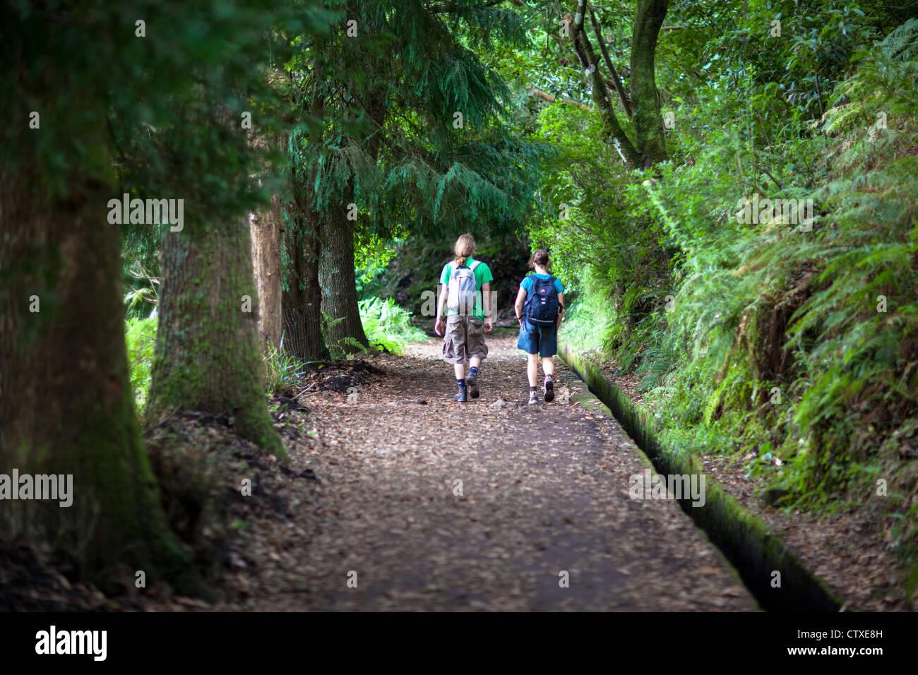 Forêt à pied Madère Portugal Photo Stock