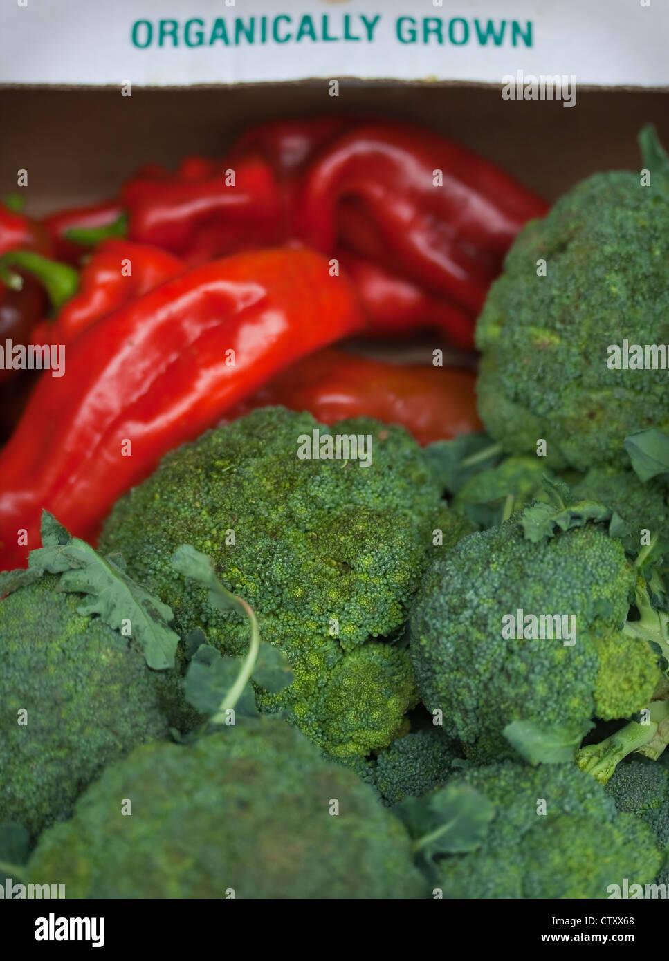 Légumes issus de l'écran, y compris le brocoli et poivrons rouges, Devon, UK Photo Stock