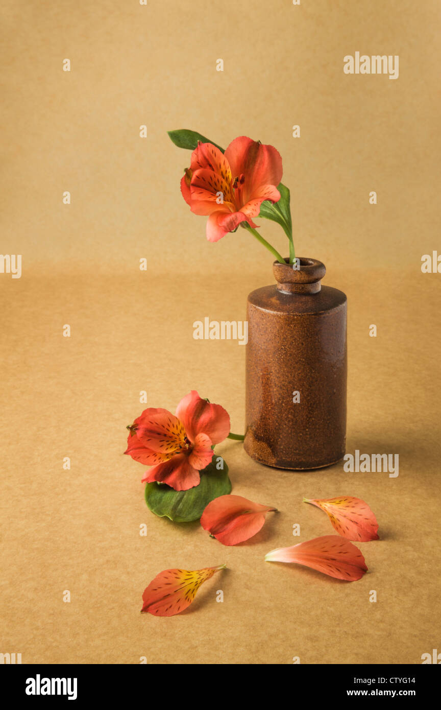 Fleur rouge en bouteille pharmaceutique antic Photo Stock