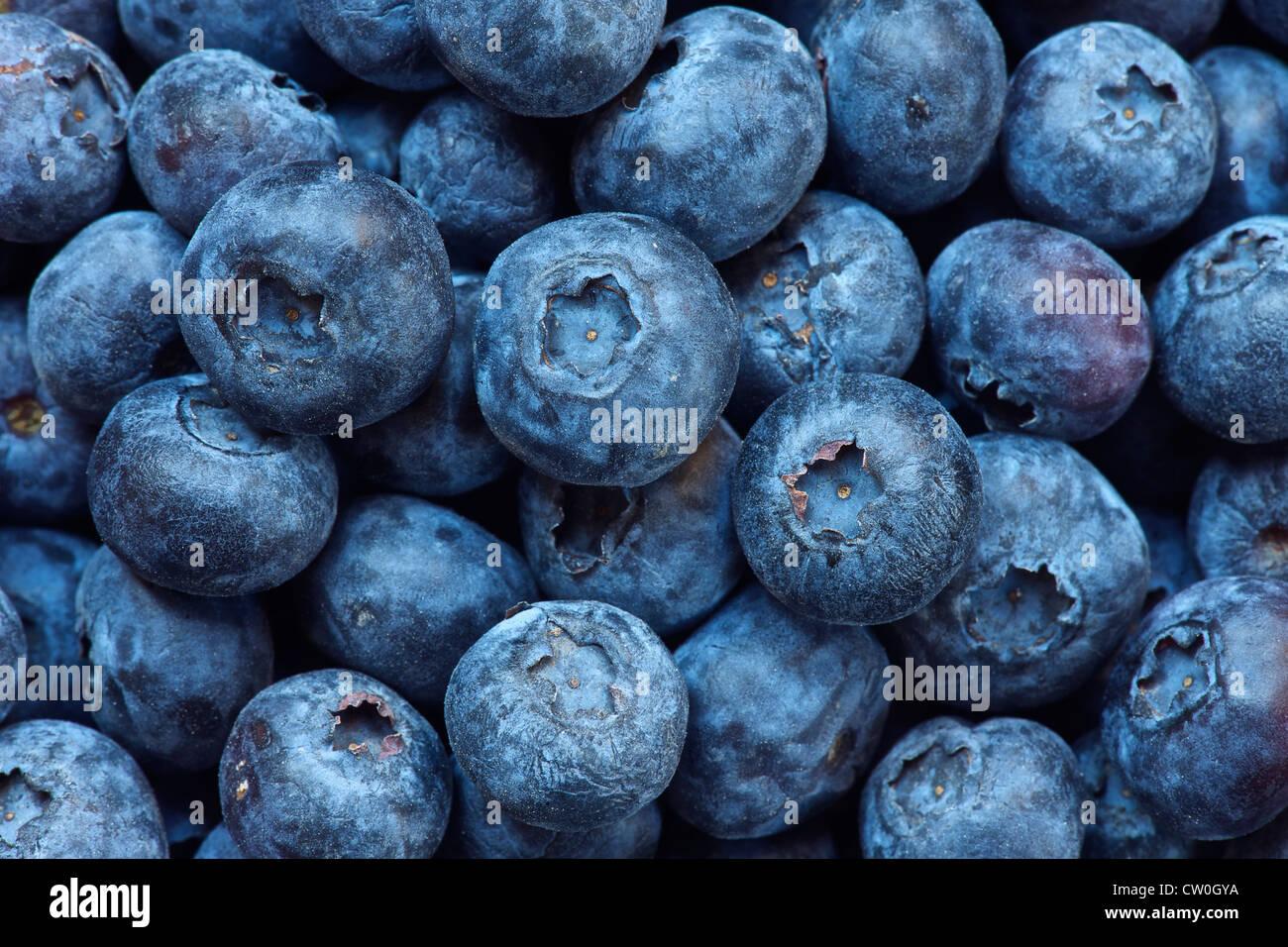 Close up of bouquet de bleuets Photo Stock